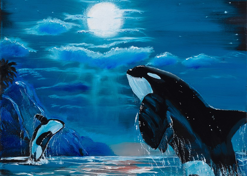 Orcas Jumping in the Moonlight